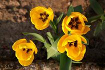 C-ral-raffaellalunelli-fiori-botondoro