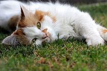 Cat on the grass by Raffaella Lunelli