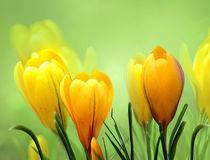 Frühlingsgefühle von Ingrid Clement-Grimmer