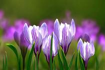 Frühlingszeit von Ingrid Clement-Grimmer