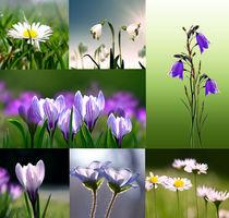 Frühlingsboten by Ingrid Clement-Grimmer
