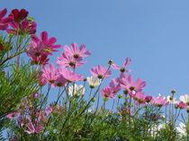 Blumengrüße 1 von Karoline Stuermer
