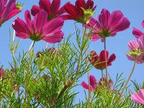 Blumengrüße 2 von Karoline Stuermer