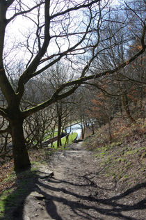 Woodland View - Huddersfield Narrow Canal von Paul Oakes