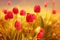 Tulpenwiese von Violetta Honkisz