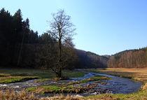 Wo der Wildbach fließt von Wolfgang Dufner