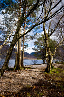 Imgp6686-trees-by-loch-maree