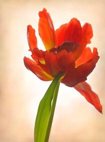 Es wird immer wieder Frühling by inti