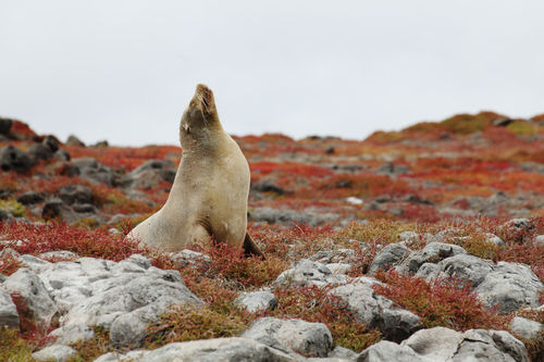 06-kreuzfahrt-tag-3-37-sea-lion