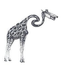 Surveillance Giraffe  von Amber McCoy