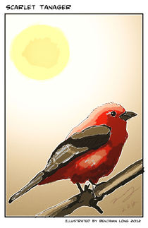 Scarlet Tanager Colored Pencils by Benjamin Long
