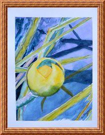 Water Lily Habitat 2 von Warren Thompson
