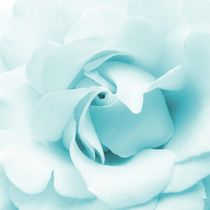 Pale blue rose by sharon lisa clarke
