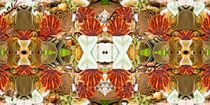 Crabs-with-shells-1