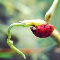 Ladybird by Jinnie Davel