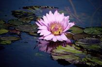 rosa Seerose in dunkelblauem Teich von Christine  Hofmann