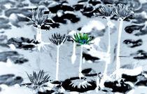 grüne Seerose  von Christine  Hofmann