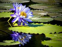 blaue Seerose by Christine  Hofmann
