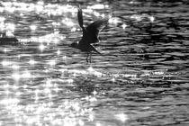Flying seagull bird von Odon Czintos
