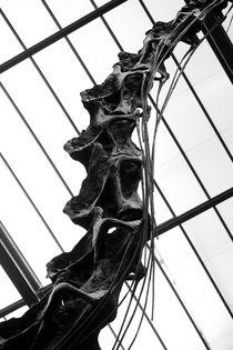 Dinosaurierskelett im Naturkundemuseum Berlin by Erwin Kerkenberg