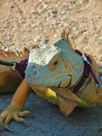 Reptile von Alberto Vaccari