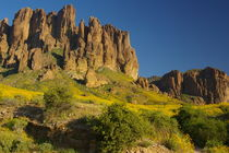Brittlebush in the Superstition Mountains by Pat Goltz