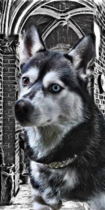 Husky by lessaksart