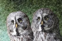 Great Grey Owl von Dawn OConnor