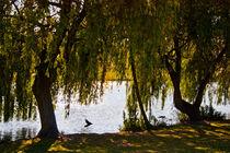 Willow and Lake von Dawn OConnor