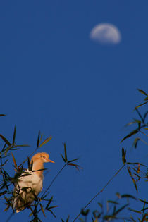 a free bird under the moon.. by astha