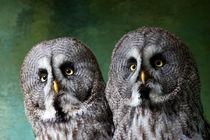 Double Take, Pair of Owls von Dawn OConnor