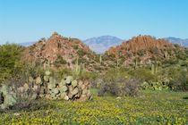 Tucsonmtns115