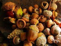 Nuts von Johanna Gordon