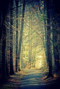 Licht am Ende des Weges von Elke Balzen
