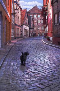 Streetdog 3 von pahit