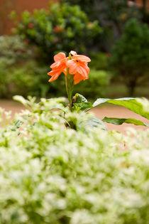 Orange coloured flower von reorom