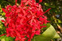Red flowers von reorom