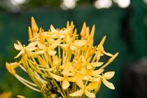 Yellow flower von reorom
