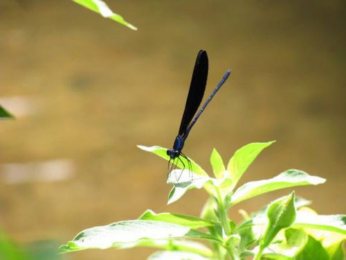 Butterfly-on-the-leave
