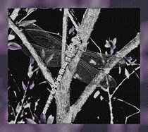 night dragonfly by zahara-dzignz-2011