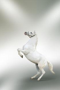White horse rearing von tkdesign