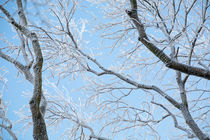 Branches covered in hoar frost by kbhsphoto