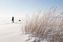 Woman and dog on the ice in the Archipelago of Stockholm, Sweden by kbhsphoto