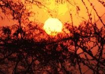 Morgensonne von Bernhard Kosten