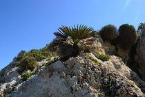 Sizilien, Palme auf Felsen von sandarine