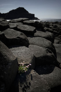Giant's Causeway by Tom Hanslien
