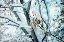winter forest by yulia-dubovikova