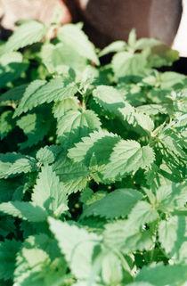 nettle thickets von yulia-dubovikova