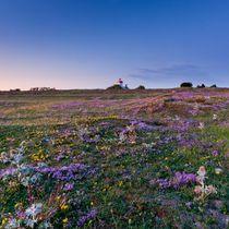 Summer Twilight  by Maciej Markiewicz