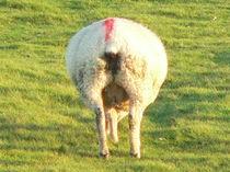 Wolle von mitlichtmalen
